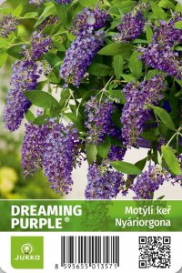 Motýlí keř - DREAMING PURPLE