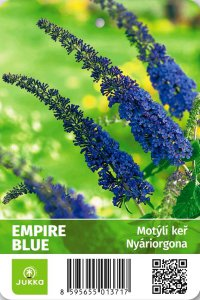 Motýlí keř - EMPIRE BLUE