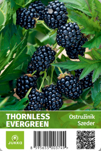 Ostružiník THORNLESS EVERGREEN