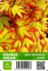 Javor ORANGE DREAM