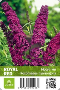Motýlí keř - ROYAL RED