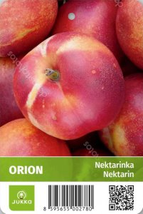 Nektarinka ORION